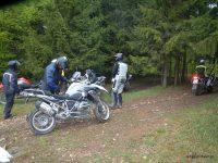 Aufwachrunde in den Wald